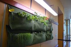 Planten tegen de muur